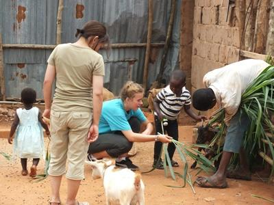 Volunteer feeding goats in Agriculture Project in Togo