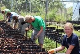 Conservation volunteers tend to seedlings at a tree nursery, helping with reforestation efforts in Ecuador.