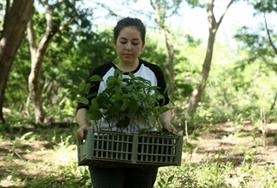 A volunteer carrier a plant on a Conservation project placement in Costa Rica