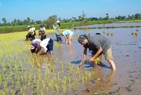 Volunteers participate on Khmer Project activities in Cambodia