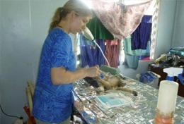Volunteer Veterinary Medicine