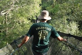 A Conservation volunteer travels across a tree canopy walkway, conducting a wildlife survey in the Amazon jungle in Peru during the Easter vacation.
