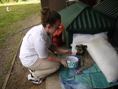 Projects Abroad Animal Care volunteer gives water to a dog in Belize
