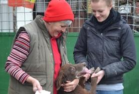A local staff member introduces an Animal Care volunteer to one of the dogs at an animal shelter in Romania.