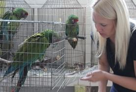 A Veterinary Medicine volunteer cares for and feeds exotic birds at her placement in Mexico.